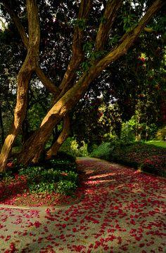 Trelissick path