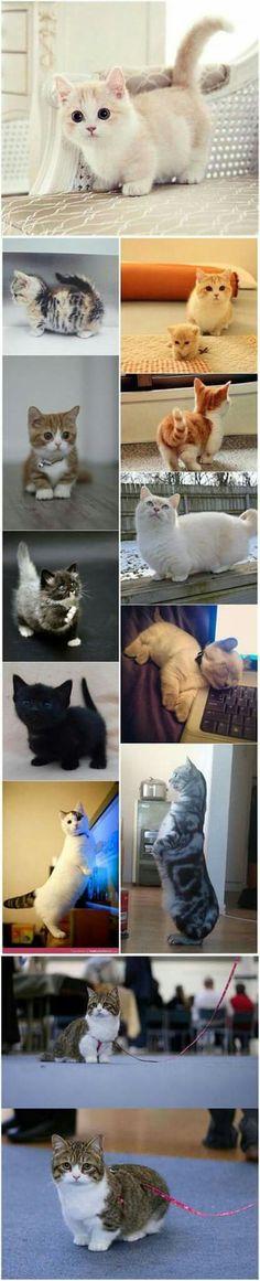 Cute cat<3
