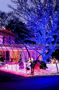 Blue, Pink, Red, Purple, White Outdoor Christmas Light Display