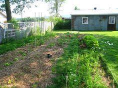 Peut-on cultiver un potager à l'ombre ? Oui ! Voici des astuces et une sélection de légumes qui poussent à l'ombre.
