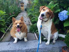 My favorite dogs, at Stonehouse Farm, Maine