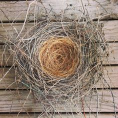hill-betty: afirethorn:  butcher bird nest on the highest branches of a jacaranda tree, Perfectly round, perfectly woven, lined with soft coconut shell fibre. An intricacy that is almost unimaginable. this perfect home was 540 hours in the making. And that is a kind of magic.