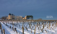 Snow time at Yquem Chateau