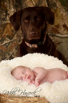 best friends for life, newborn boy and dog shoot