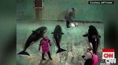 Former whale hunter shows rare film of orca captures