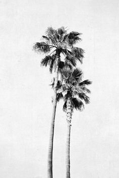 Palm Tree Photograph, Vertical Print, Black and White Art, Large Wall Art… Black And White Beach, Black And White Drawing, White Art, Palm Tree Pictures, Palm Tree Images, Palm Tree Drawing, Tree Wallpaper Iphone, Palm Tree Decorations, Pine Tree Tattoo