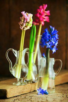 Blumen-Deko: Auftritt für Solisten Hyazinthen einzeln in verschiedene Fläschchen und Mini-Karaffen (z. B. vom Flohmarkt) stellen und als Gruppe am Tischende anordnen. Damit die Blumen länger halten: Stiele schräg anschneiden und in lauwarmes Wasser stellen, das man täglich wechselt. burdafood.net/Joerg Lehmann