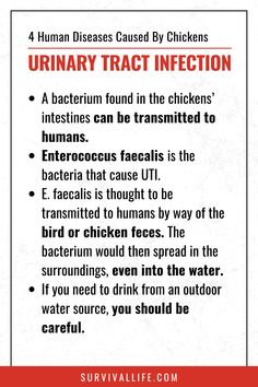 How do people get diseases caused by chickens? Read and learn what precautionary measures to take! #diseasefromchickens #chickens #poultry #survivallife Survival Life, Survival Skills, Urinary Tract Infection, Outdoor Survival, Emergency Preparedness, Poultry, Messages, Thoughts, Learning
