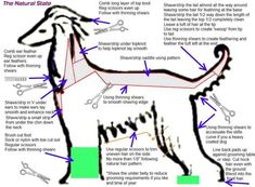 There are so many 'mindsets' on grooming that's it's best to research all and find what works for you. I am sharing mine here. I am not the end all of Afghan Hounds, nor s…
