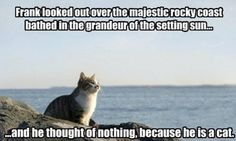 Cat-atonic.