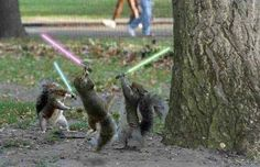 The force is strong with these Squirrels
