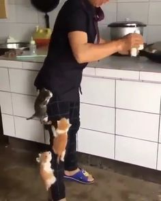 Cute Kittens can't wait for milk anymore Cute Kittens, Cats And Kittens, Cute Funny Animals, Cute Baby Animals, Wild Animals, Cute Gif, Funny Cute, Gif Bonito, Gif Lindos