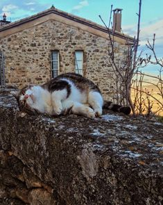 A friendly village cat I met while studying abroad in rural France. All of the students had different names for him like Claude, Tiger Bread, Pierre, Oliver, and Spud. On our last day in the village we learned from a local that his real name is Willie!