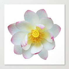 Snuggle up with artwork and stylish patterns from independent artists across the world. Rose Gift, Lotus Flower, Orchids, Photograph, Wall Art, Flowers, Plants, Gifts, Design