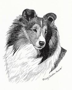 Hey, I found this really awesome Etsy listing at https://www.etsy.com/listing/97892199/sable-sheltie-pen-and-ink-print