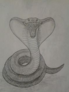 Gallery For gt Cool Snake Drawings