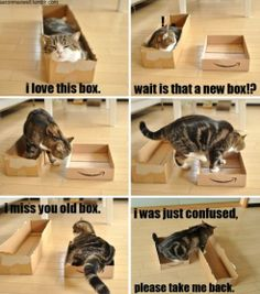 Cats and boxes - MEME, Funny Pictures, LOL, Comics and Jokes