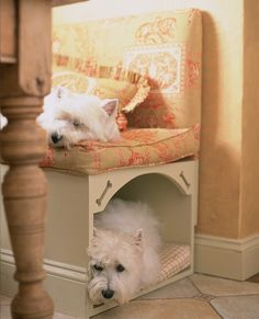 great place for a dog bed, westies