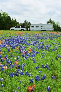 See the bluebonnets on a spring road trip in Texas Hill Country. Discover bluebonnnet trails that you can drive plus where to stay in the heart of Texas. Texas Parks, State Parks, Texas Hill Country, Country Roads, Spring Texas, Texas Roadtrip, Us Travel Destinations, Back Road, Blue Bonnets