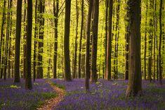 Wald #55 by HeikoGerlicher.deviantart.com on @DeviantArt