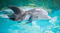 Mom & baby dolphin #adorable #family