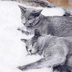 Was ist eigentlich der einfachste Weg glücklich zu werden? Kann ein ewig hungriges, schlitzohriges Monstrum mit vier Pfötchen glücklich machen? Die Antwort und vieles mehr zu meinen beiden Katzen findet ihr in meinem Blog.