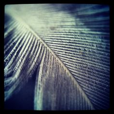 Feather Macro - http://instaprints.com/featured/feather-macro-vicki-field.html