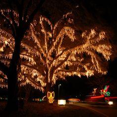 Top 10 Holiday Celebrations - Charleston Holiday Festival of Lights | CoastalLiving.com