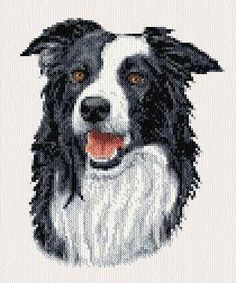 Border Collie - cross stitch pattern designed by Marv Schier. Category: Dogs.