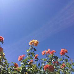 Trendy Plants Aesthetic Girl 35 Ideas – Best Home Plants Plant Aesthetic, Spring Aesthetic, Flower Aesthetic, Aesthetic Girl, May Flowers, Pretty Flowers, Fresh Flowers, Blooming Flowers, Hillside Garden