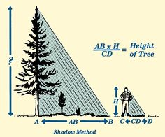 Field-Expedient Tricks for Estimating the Height and Width of Objects Survival Life Hacks, Survival Food, Camping Survival, Outdoor Survival, Survival Prepping, Survival Skills, Survival Supplies, Survival Equipment, Tree Felling