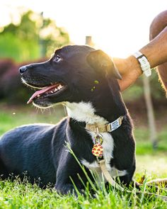 It's 🌎 day, so respect her! Celebrate her! Enjoy her! #EarthDay Pet Id Tags, Respect, Labrador Retriever, Pitbulls, Pets, Animals, Labrador Retrievers, Animales, Pit Bulls