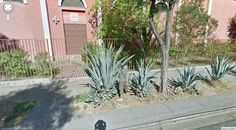 http://google-street-view.com/dont-get-too-close-to-that-prickly-plant/