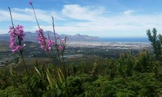Helderberg Nature Reserve South Africa Somerset West, Nature Reserve, Travel Photos, South Africa, Westerns, Mountains, Live, Image, Travel Pictures