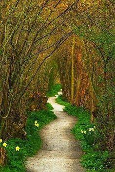 Yew Tree Tunnel, Netherlands