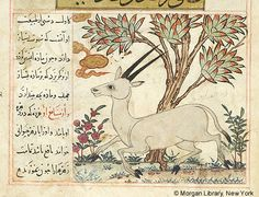 Bestiary, MS M.500 fol. 35r - Images from Medieval and Renaissance Manuscripts - The Morgan Library & Museum