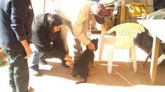 #Prefeitura vai vacinar 700 cães contra leishmaniose até quinta-feira - Campo Grande News: Campo Grande News Prefeitura vai vacinar 700…