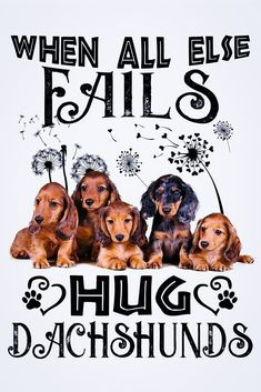 Dachshund Quotes, Dachshund Love, Dog Stories, Funny Phrases, Daschund, Cat Treats, Sign Quotes, Dachshunds, Doggies