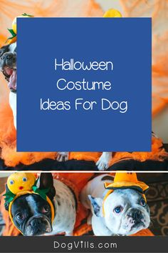 Dress your dogs (even your Great Dane) in one of these Large Dog Halloween Costumes For Boy Dogs. Dog Halloween Costumes, Boy Costumes, Boy Dog, Dog Mom, Cute Dog Collars, Diy Dog Toys, Dog Fashion, Pet Photographer, Dog Accessories