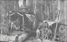 Logging Companies in Washington | before William Hamilton
