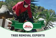 Our tree care experts are standing by to assist you - we have decades of experience and know which safety precautions to ensure the safety of people and buildings.  Contact us on 0861 708 000 or (011) 708-0088 or brandstf@mweb.co.za / office@brandstreefelling.co.za  Our Tree Felling teams are equipped with all of the necessary PPE and sanitising equipment.  #treefelling #dangeroustreeremoval #fallentreeremoval #essentialservicespermit #treefellingsolutions #brandstreefelling