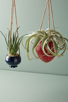 Best Outdoor Creative, DIY Hanging Planter Ideas You can after that hang planters from freestanding hooks to ensue a bit of zenith to your garden beds or dangle flower pots from a large tree in your yard. Potted Plants, Indoor Plants, Indoor Outdoor, Porch Plants, Shade Plants, Indoor Gardening, Air Plants, Terrarium Plants, Plant Pots