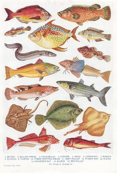 vintage FISH print Colorful tropical ocean life marine biology fish illustration. $9.95, via Etsy.