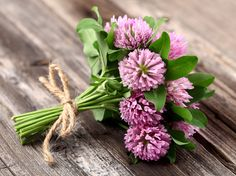Red Clover - The sweet red flowers are edible; you can add them to salads or drinks as a garnish