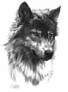 "Julie Bell sketch 2000 ""wolf head"""