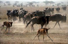 10-Day Kenya Tanzaia Safari Tour