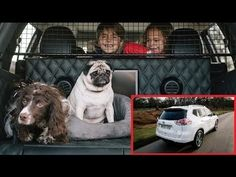 Familia Basset Hound: O primeiro carro projetado para quem tem cachorros...