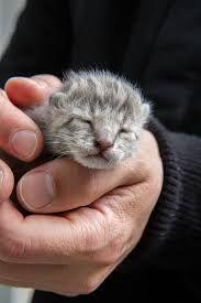 Bildergebnis für istanbul cats