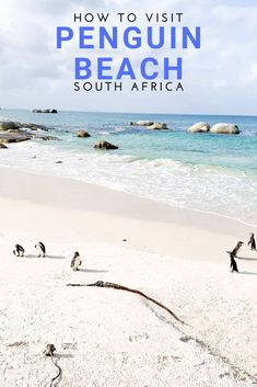 How to see penguins on the amazing Boulders Beach! Destin Beach, Beach Trip, Vacation Trips, Beach Vacations, Beach Travel, Beach Bum, Luxury Travel, Group Travel, Family Travel
