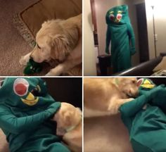 The video of the guy who dressed up as his dog's favourite toy for Halloween, which made it go predictably crazy with joy. | 12 Pictures That Will Restore Your Faith In 2016